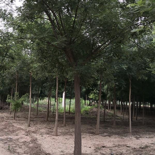 沧县沧狮苗木种植园