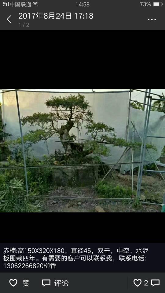 松溪县奇香花木场