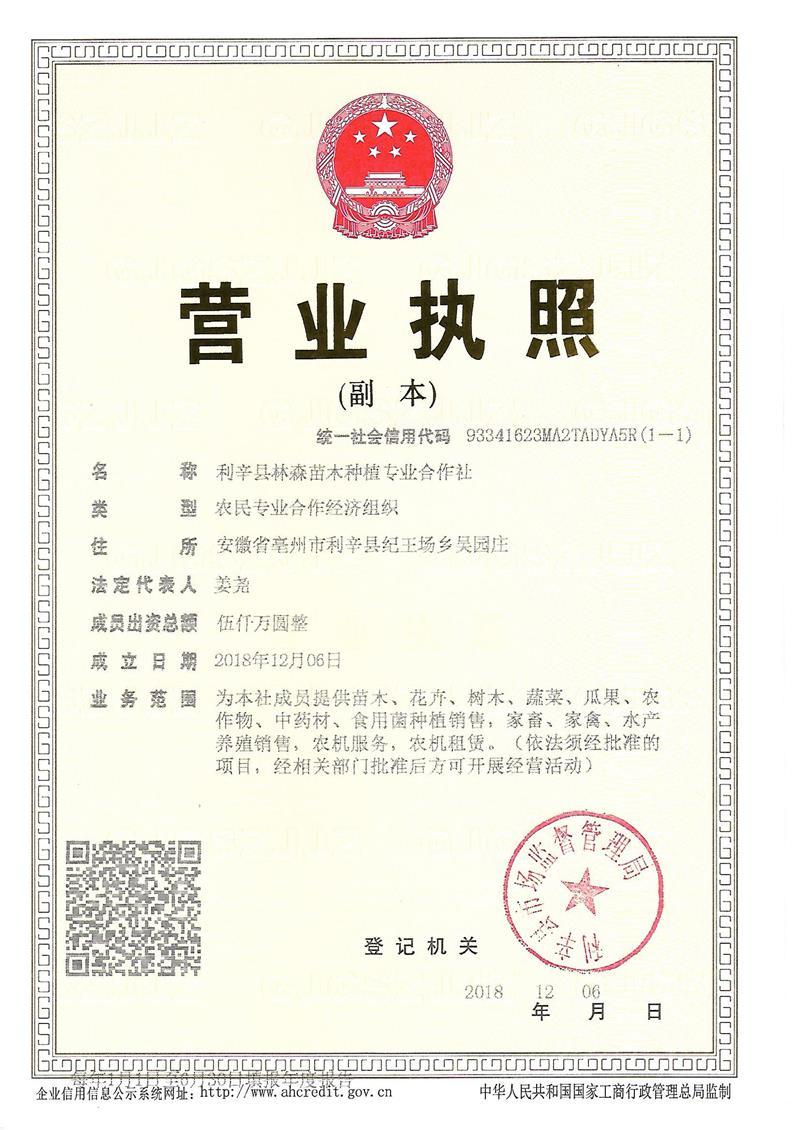 利辛县林森苗木种植专业合作社