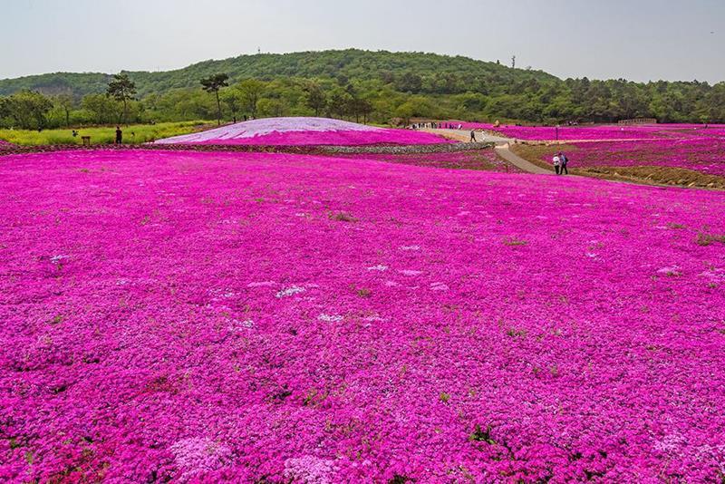 青州市友胜花卉苗木有限公司