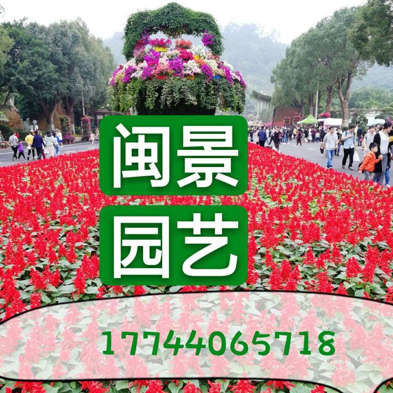 漳浦县官浔镇闽景园艺场