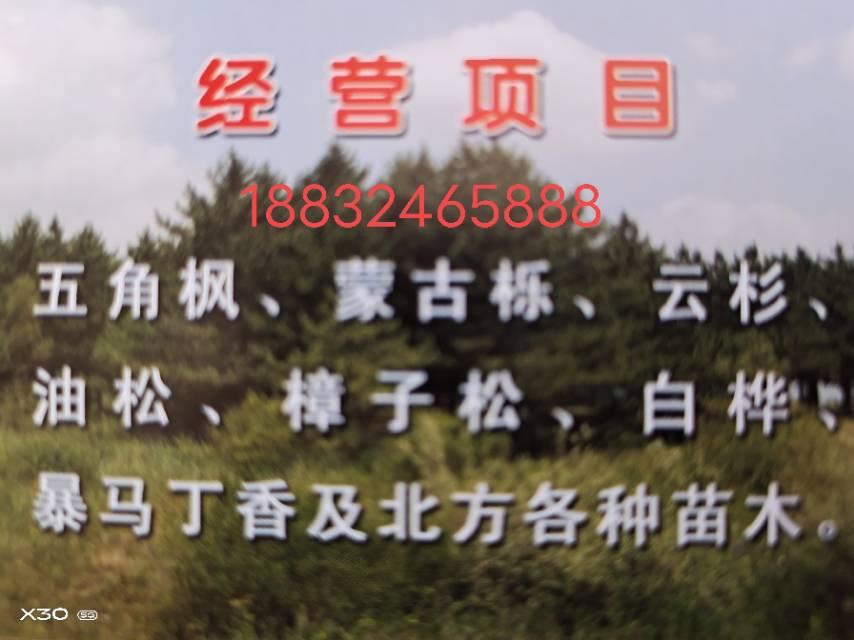 围场满族蒙古族自治县大唤起乡兴业苗圃