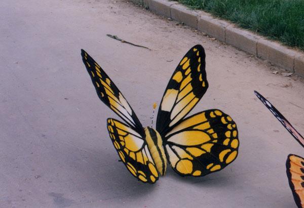 可爱的小蝴蝶简笔画