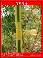 花杆毛竹(绿槽毛竹、花毛竹、花秆毛竹)