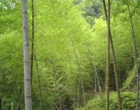 毛竹(楠竹)、红竹、早园竹、淡竹、黄古竹等