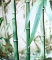 方竹、罗汉竹、小佛肚竹、花杆早竹、龟甲竹