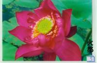 火都(荷花)---水葱、再力花、王莲