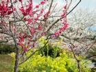 梅花树,红梅树,珍珠梅树,美人梅树,腊梅树,绿梅树,榆叶梅树