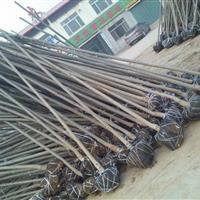 山东惠民供应4-6公分速生白蜡,山东速生白蜡基地