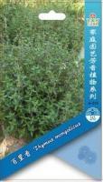 芳香植物种子、百里香