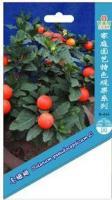 特色观果种子、冬珊瑚