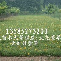大花萱草、金娃娃萱草、玉簪、鳶尾、麥冬草、美人蕉、蔥蘭