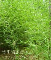 青竹,淡竹,早园竹,刚竹,金镶玉竹,黄竹,翠竹等竹子