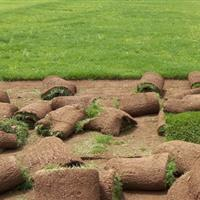 馬尼拉草坪,四季青,高羊茅草,中華結蔞草,百慕達草