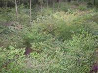 南天竹、鼠尾草、牛至