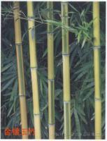 金镶玉竹、刚竹、翠竹、紫竹、早园竹、凤尾竹、毛竹、箬竹、淡竹