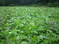 马褂木紫薇红豆杉木荷枫香池杉檫树桤木苦棟湿地松马尾木马桂花