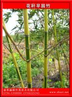 花杆早园竹(花杆早竹、花秆早园竹)