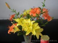 百合花卉种球