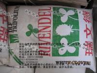 白三叶草种 石家庄草种 衡水草种