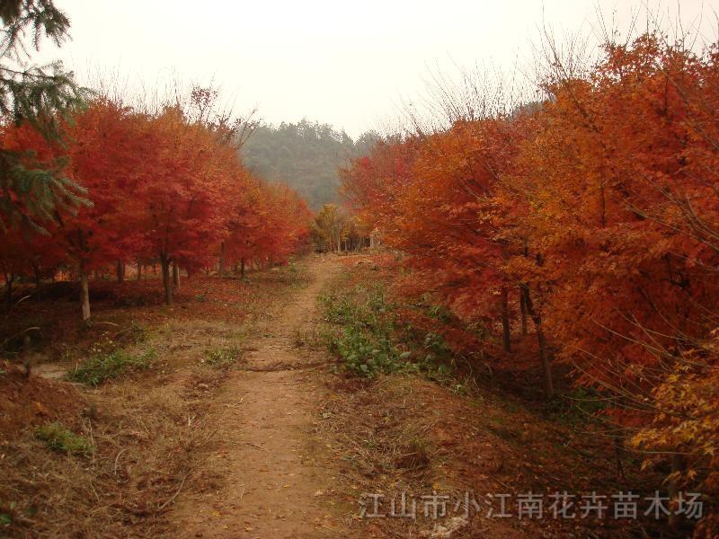 江山市小江南花卉苗木场