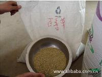 护坡草种-百喜草,百喜草种子,别称:巴哈雀稗,百喜草基地