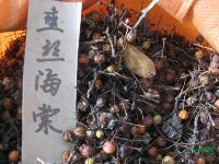 垂丝海棠种子,垂丝海棠苗,别名:海棠、海棠花、垂枝海棠