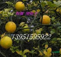铁篱寨枸橘子钢桔子臭桔籽枳壳种子价格优惠快递全国各地