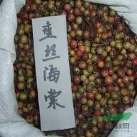 桂花種子、 紫丁香種子、芙蓉種子.蝴蝶蘭種子玫瑰種子七葉樹種