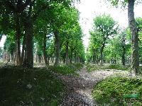 櫸樹、樸樹、無患子