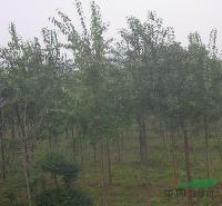 丝棉木、鸡爪槭、木瓜、樱花、紫荆、紫薇、紫藤