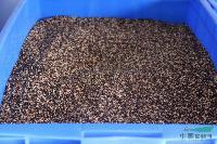 苏丹草种子,苏丹草种苗,苏丹草,江苏沭阳苏丹草,苏丹草基地
