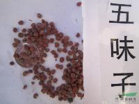 五味子种子,五味子(果),别称:山花椒、北五味子