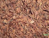 灌木种子红丁香,红丁香种苗,苏北沭阳红丁香种子