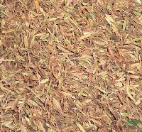 灌木种子:小叶丁香种子,别 名:四季丁香、二度梅、野丁香