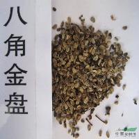 八角金盤種子,八角金盤苗,別稱:八金盤、八手、手樹;手樹