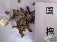 國槐種子,國槐角種子,別稱:槐樹、槐蕊、豆槐、白槐、細葉槐