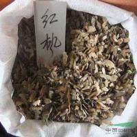 红枫,红枫种子,别名:紫红鸡爪槭,苏北沭阳红枫基地