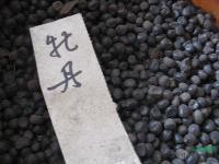 牡丹种子,牡丹,别称:鼠姑、鹿韭、白茸、木芍药、百雨金、洛阳