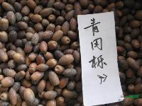 青冈栎种子,青冈栎,别名:青冈树,紫心木 、青栲 、花梢树
