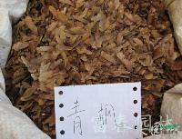青枫种子,青枫种苗,青枫,别称:鸡爪槭,青枫基地,沭阳青枫