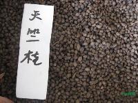 天竺桂种子,天竺桂,别称: 普陀樟,月桂叶、天竹桂、山肉桂