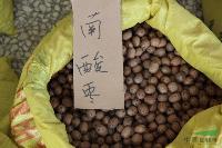 南酸枣种子,南酸枣,别称:五眼果、四眼果、酸枣树、山枣树