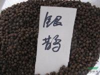 银鹊树种子,银鹊树,别名:瘿椒树,银鹊树基地,苏北沭阳银鹊树
