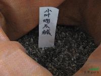 鸡爪槭种子,鸡爪槭苗,别称:鸡爪枫,槭树,沭阳鸡爪槭基地
