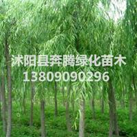 垂柳、金丝柳、栾树、白腊、合欢
