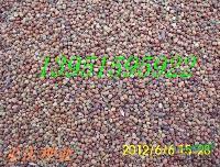 多花木兰黑麦草紫花苜蓿苏丹草高丹草墨西哥玉米等牧草种子