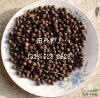 江苏沭阳低价供应批发滇朴 滇朴种子