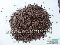 阿拉比咖啡种子,白三叶种子,北京栾种子