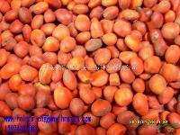 花梨木种子,鄂西红豆、张家界地区、永定区鑫城君泰115门面